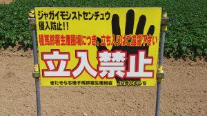 北海道深川市| 「ジャガイモシストセンチュウ」侵入防止にご協力を!